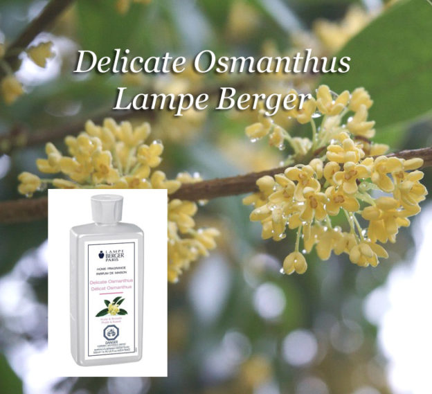 Delicate Osmanthus Lampe Berger Anns Houston Tx