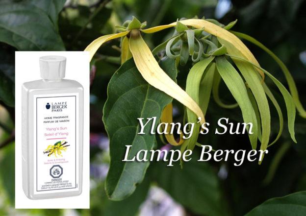 https://www.annsfinegiftsblog.com/wp-content/uploads/2017/06/Ylangs-sun-flower-copy-624x441.jpg
