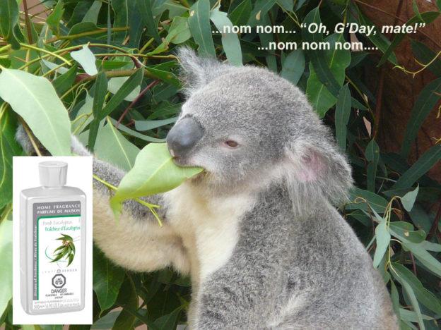 fresh eucalyptus lampe berger anns houston tx